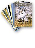 postcards main - ערכת גלויות גדולות מאגמון החולה