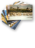 postcards main - ערכת גלויות קטנות  מאגמון החולה